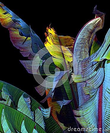 Free Banana Leaves Royalty Free Stock Photography - 50017
