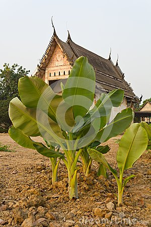 Banana old church.
