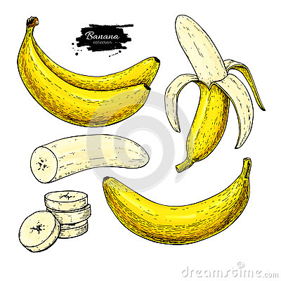 Free Banana Set Vector Drawing. Isolated Hand Drawn Bunch, Peel Banana And Sliced Pieces. Summer Fruit Artistic Royalty Free Stock Photography - 88943567