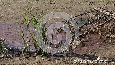 Banco de rio poluído Disastre ecol?gico filme