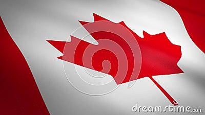 Bandeira do Canadá Sinalizador de onda com textura de malha altamente detalhada, vídeo sem interrupções e com loopable Loop sem f vídeos de arquivo