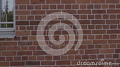 Bandeja handheld do close up do movimento lento de emendas enchidas na parede de tijolo vídeos de arquivo