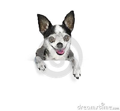 Bandiera del cane