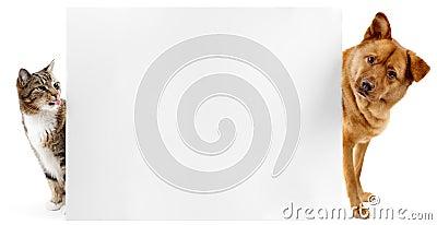 Banerkatthund