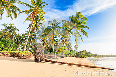 Bangsak beach in blue sky and palm trees at Phangnga, Thailand.