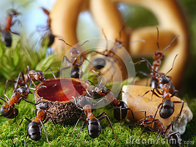 Party in anthill with honey and cake, ant tales