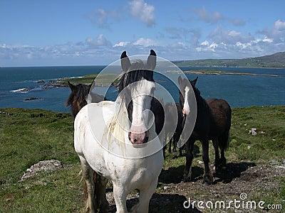 Bantry Bay Horses