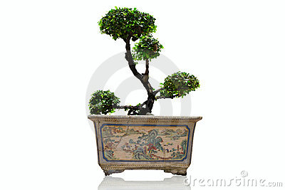 Banyan in pot antique