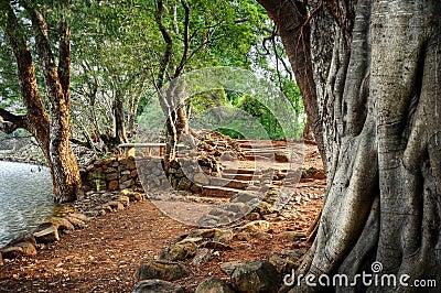 Banyan Tree HDR