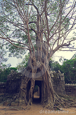 Free Banyan Tree Over The Door From Ta Som. Angkor Wat Stock Photo - 8515750