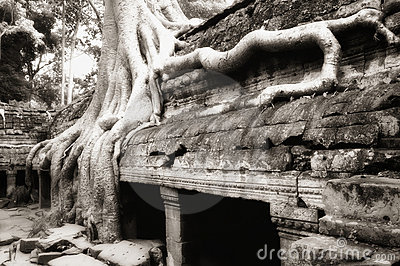 Banyan tree roots at Ta Prohm