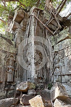 Banyan trees on ruins