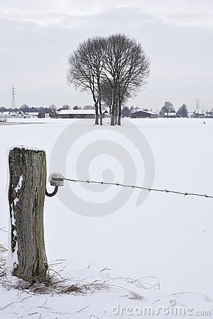Barb wire in snow