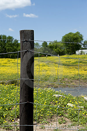 Barbed Wire Fence And Post