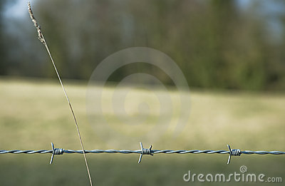 Barbed Wire with Grass