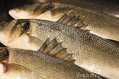 Barbs on the fins of sea bass