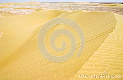 Barchan dune complex in Qatar