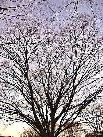 Bare branched tree