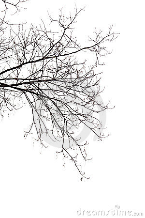 Free Bare Branches Stock Photography - 23557032