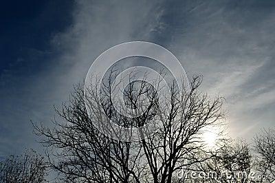 Silhouette tree stormy sky