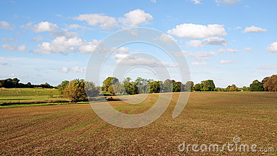 Bare Earth on Farmland