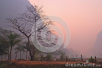 Bare majestic tree at dawn