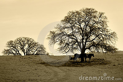 Bare Oak Tree and Horses in Winter