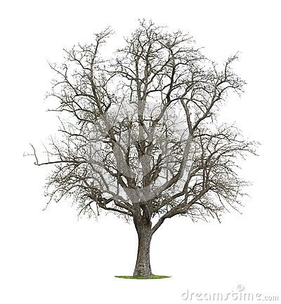 Free Bare Tree Royalty Free Stock Photos - 52152778