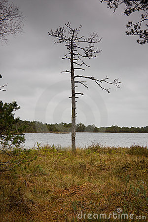 Free Bare Tree Royalty Free Stock Photography - 6856077