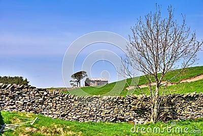 Bare tree, barn, and dry stone wall.
