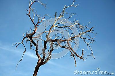bare-tree-branch-thumb851376.jpg