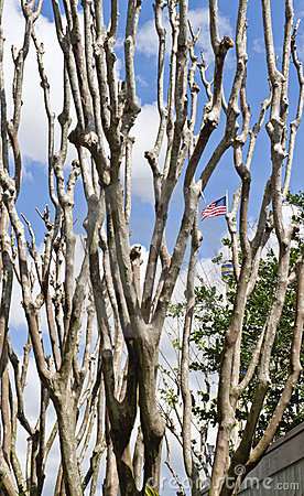 Bare Tree with the Flag Behind