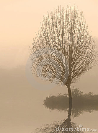 Bare Tree in Fog at Dawn