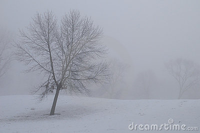 Bare tree in the fog and snow