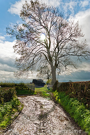 Bare tree on a lane