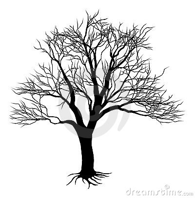 Free Bare Tree Silhouette Royalty Free Stock Image - 20777986