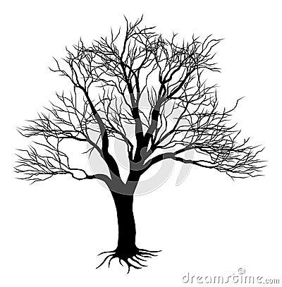 Bare tree silhouette
