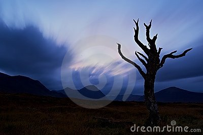 Bare tree silhouetted at dusk