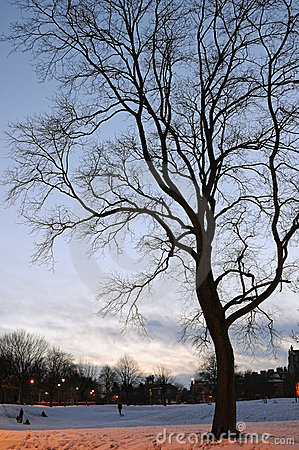 Bare tree in a snowy winter park at dusk