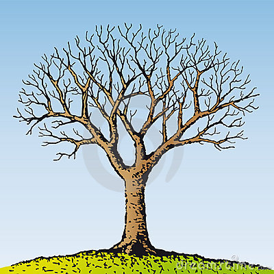 Free Bare Tree (vector) Royalty Free Stock Images - 7556559