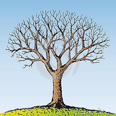 Bare tree (vector)