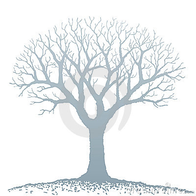 Free Bare Tree (vector) Royalty Free Stock Photo - 7565545