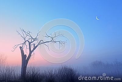 Bare Trees and Crescent Moon