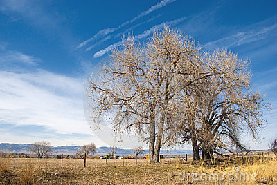 Bare Trees and Distant Farm Equipment