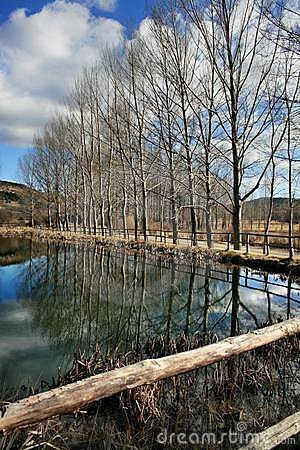 Bare trees reflecting on lake