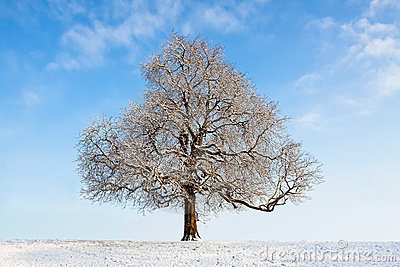 Bare winter tree