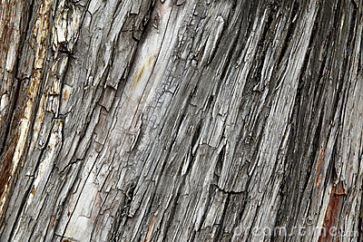 Bark Stock Images - Image: 14792694