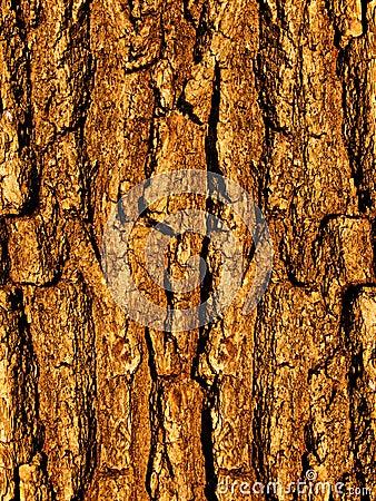 Free Bark A Tree An Oak A Close Up Stock Photo - 8358020