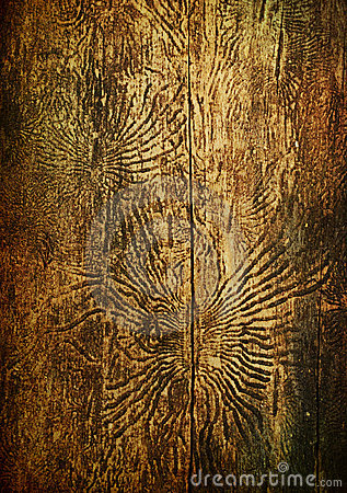 Bark beetles patterns, aged vintage background