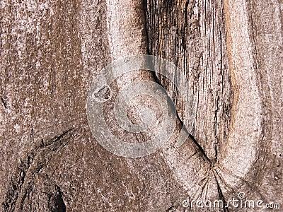 The bark of an Oak tree